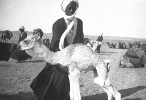Photograph of a Bedouin with a baby camel.